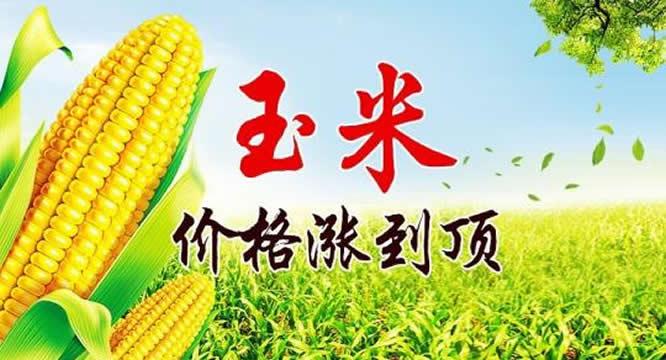 玉米价格局部上涨