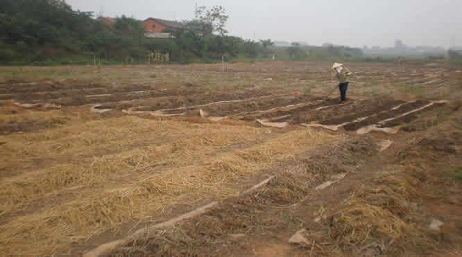 蚯蚓夏季养殖技术