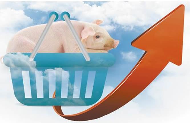 多地生猪价格小幅上涨
