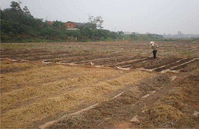 增润蚯蚓养殖技术大全(附视频和图片养殖)