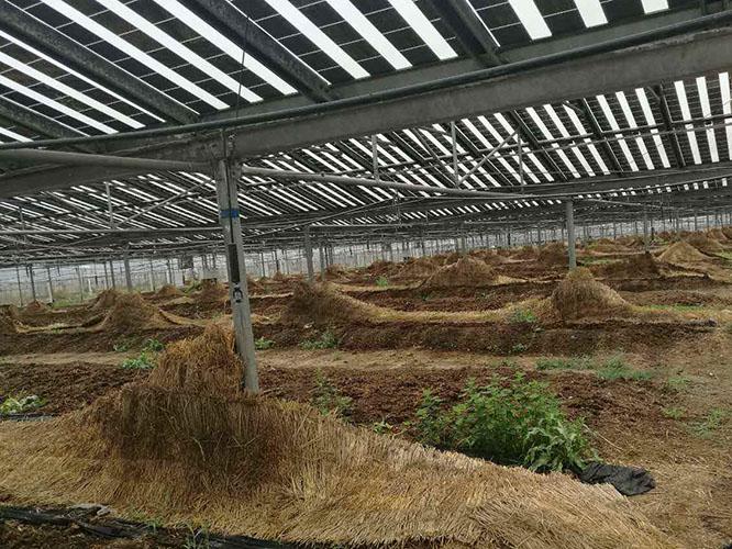 增润蚯蚓养殖场地