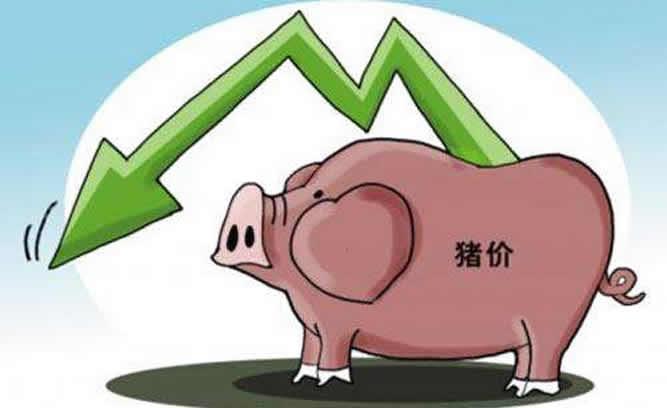 饲料涨价!猪价暴跌,养猪的怎么办?