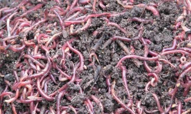 增润蚯蚓养殖