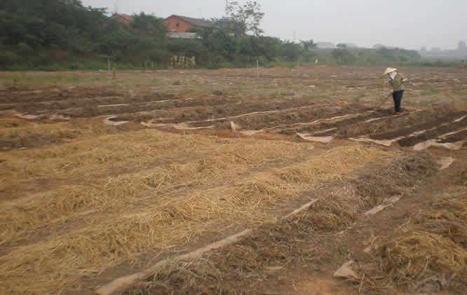 增润蚯蚓养殖方式