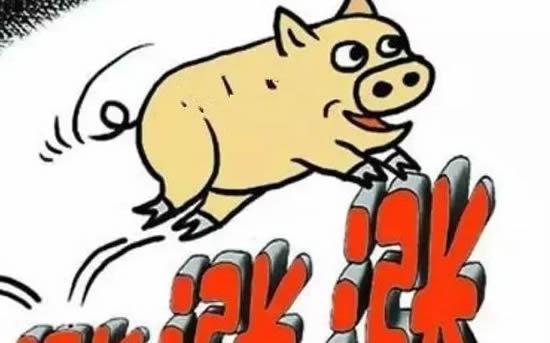 今年养猪好赚钱,猪价上涨了
