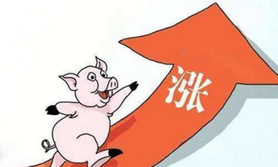 今年养猪好赚钱,猪价上涨了,进口猪肉增长