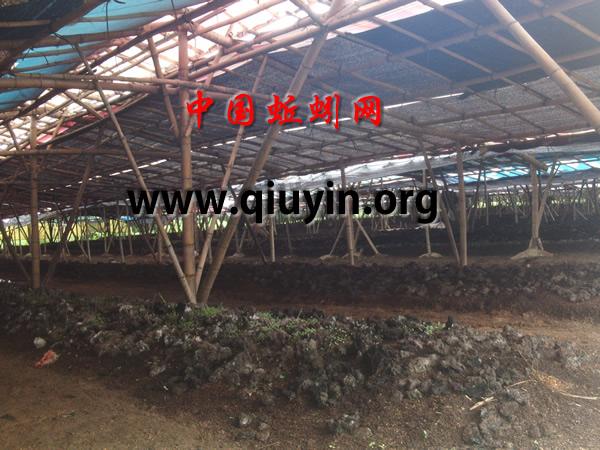 广东蚯蚓养殖图片