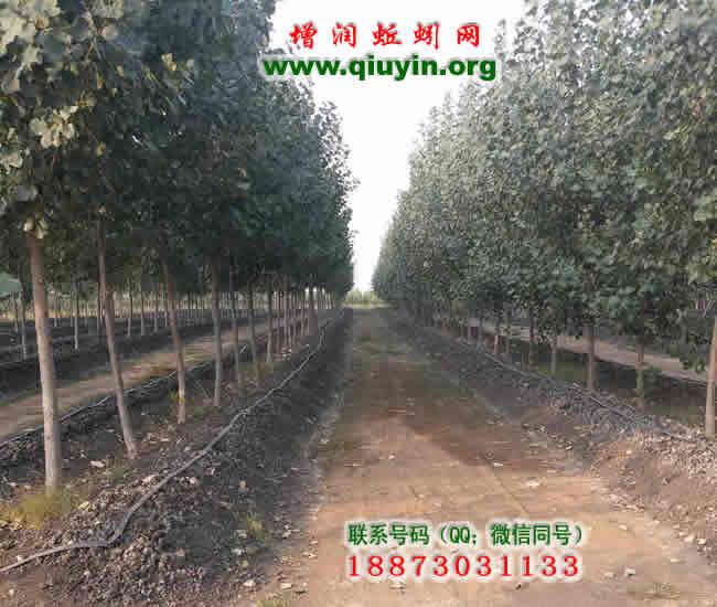 石家庄蚯蚓养殖图片